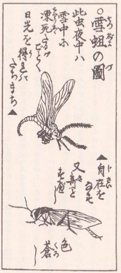 北越雪譜(挿絵6)